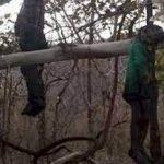 सतना में जंगल में सामूहिक सुसाइड, पेड़ पर लटके मिले, तीनों हुए कंकाल